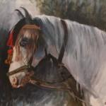 Horse from Chittaurgarth India