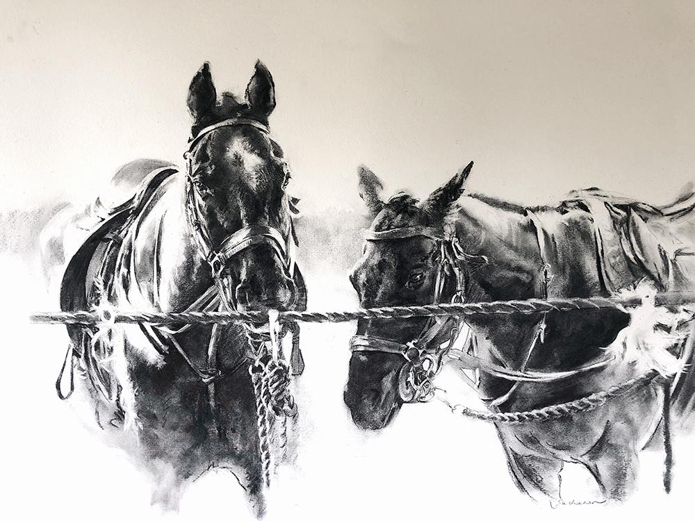 polo ponies Buchanan