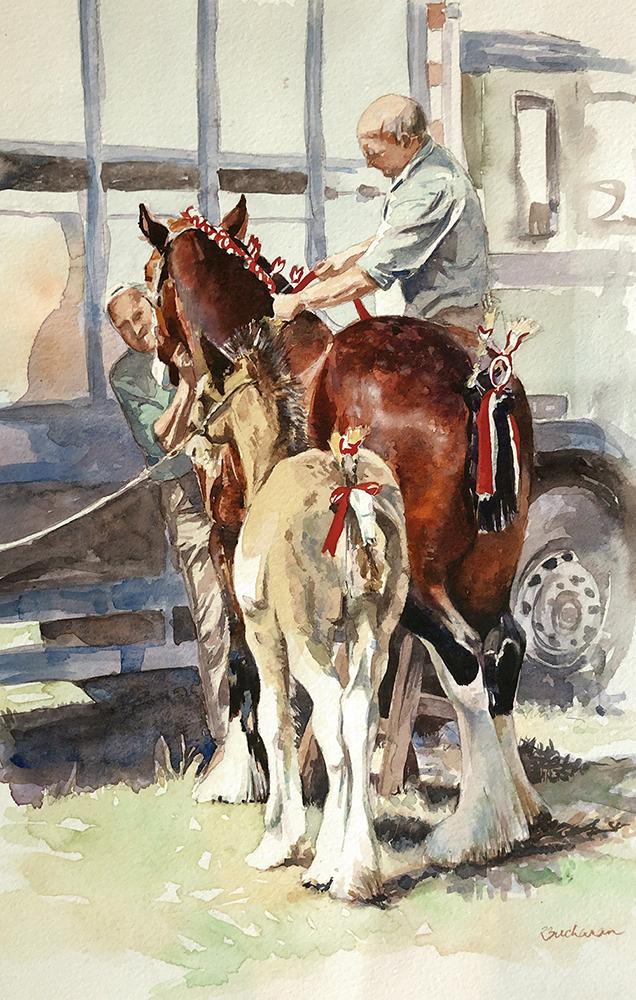 Shire mare R Buchanan