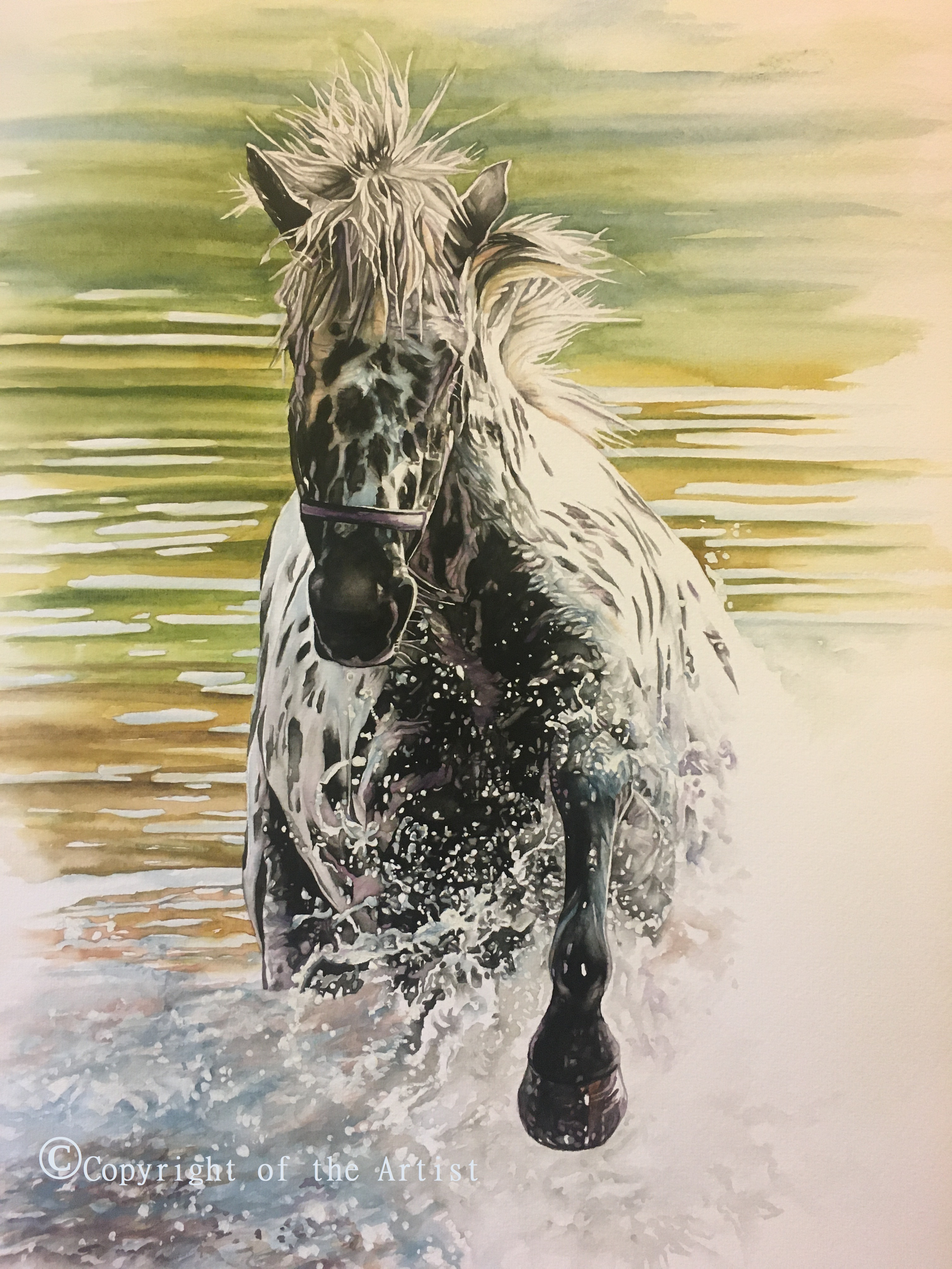 Appaloosa horse watercolour painting