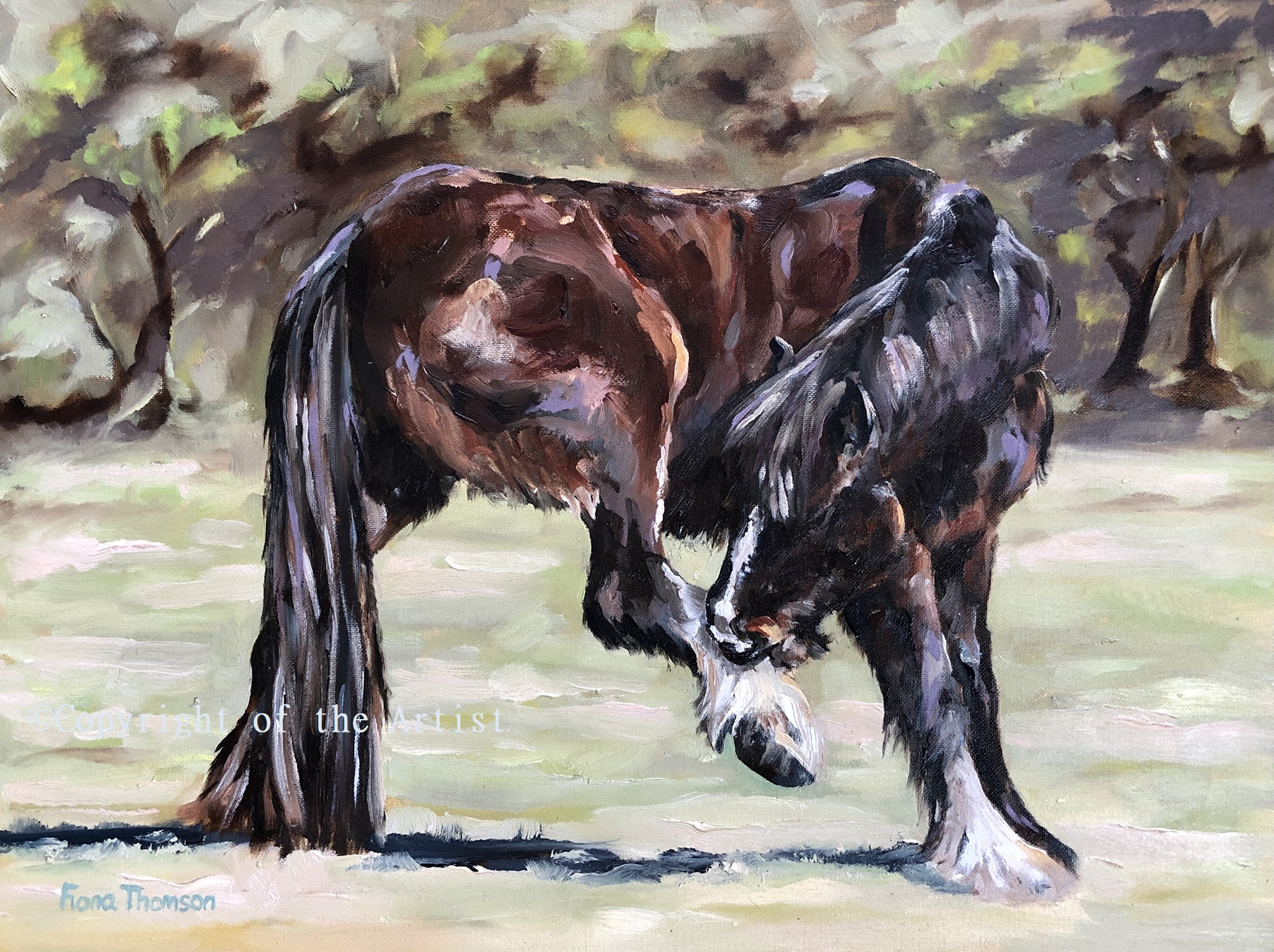 Fiona Thomson oil painting horse