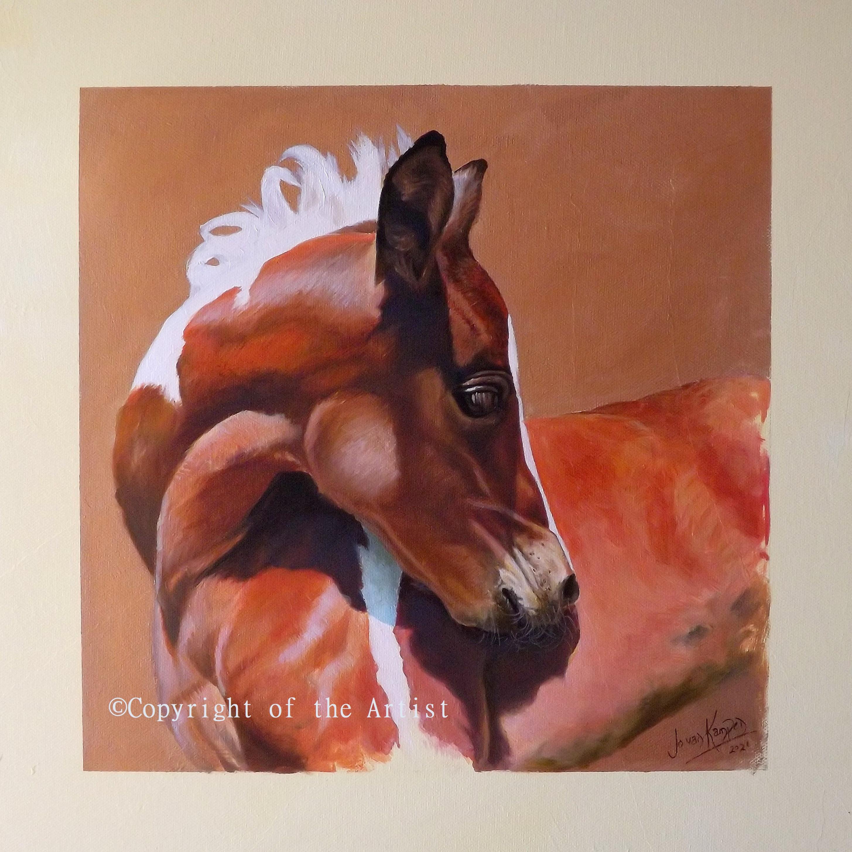 Jo Van Kampen daisy foal
